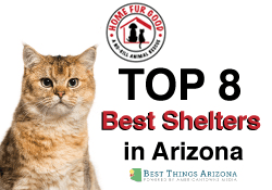The 8 Best Animal Shelters in Arizona!