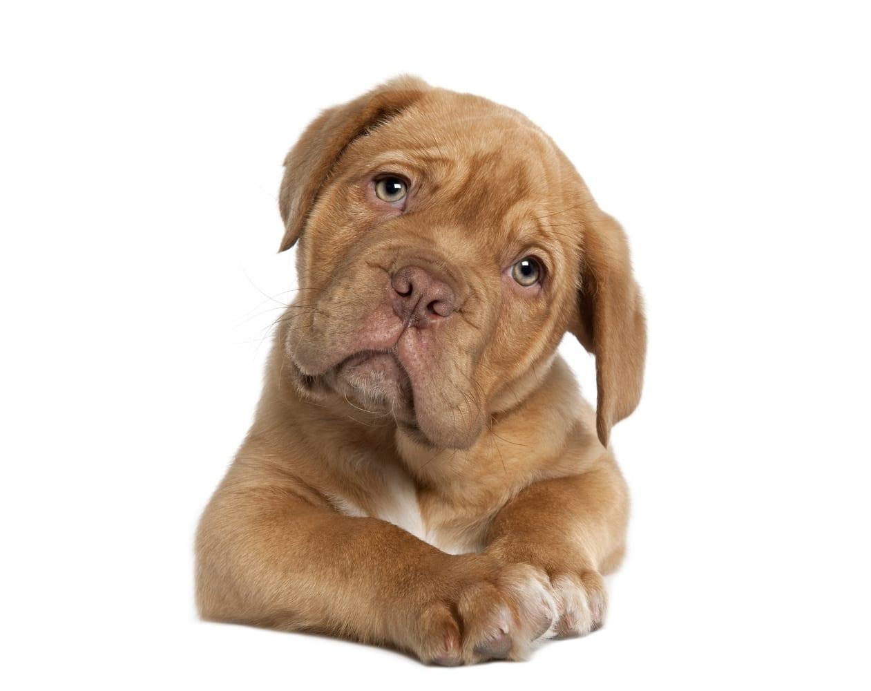 Dog For Adoption Near